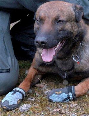 NRW Polizei Hunde